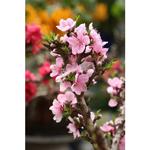 Bí quyết chụp hoa đẹp ngày Tết