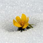 [The Big Picture] Khoảnh khắc mùa Xuân ở Bắc bán cầu