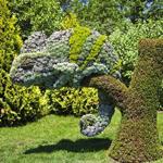 """Choáng váng trước những hình khối """"điêu khắc"""" từ cây cảnh"""