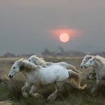 Ngựa tung vó trong triển lãm ảnh lịch mừng năm Ngọ