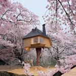 Những ngôi nhà trên cây đáng kinh ngạc nhất thế giới