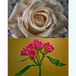 Quá trình nở của 21 loại hoa qua video time-lapse